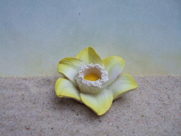 Narzissenblüte - gelbweiß