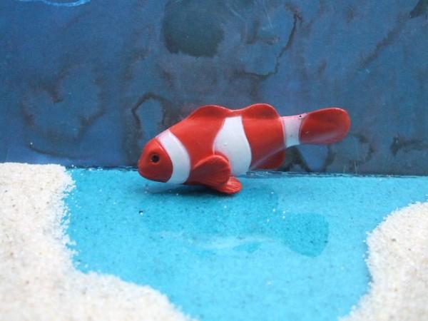 Rotweiß gestreifter 'Clown Anemone Fish'