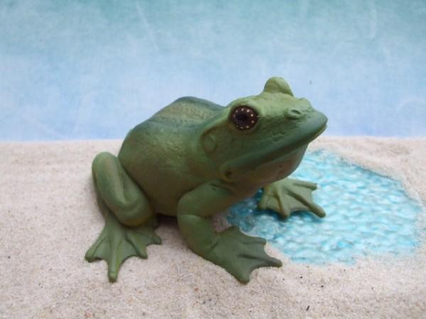 Großer, grüner Laubfrosch - weiblich
