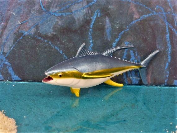 Gelbflossen-Thunfisch