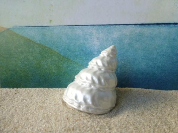 'Seashells'... Japanische Kreiselschnecke