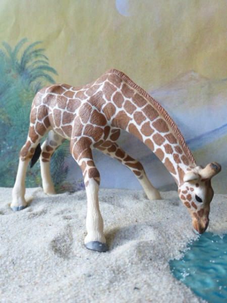 Giraffe - trinkend