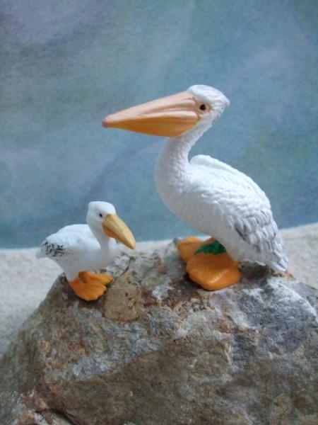 Pelikan mit Jungtier