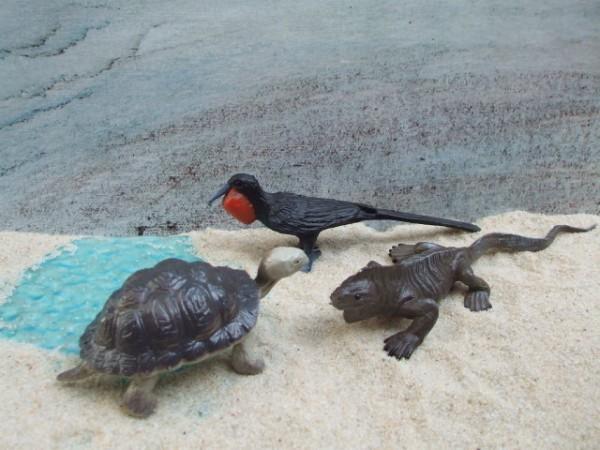 'Little Galapagos'- Meeres Leguan & Fregattenvogel & Schildkröte