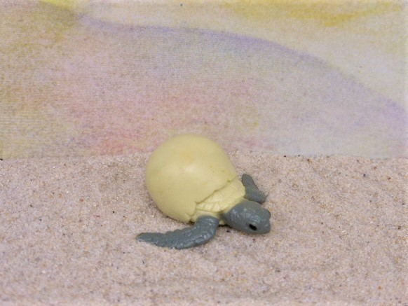 Schlüpfende Meeresschildkröte
