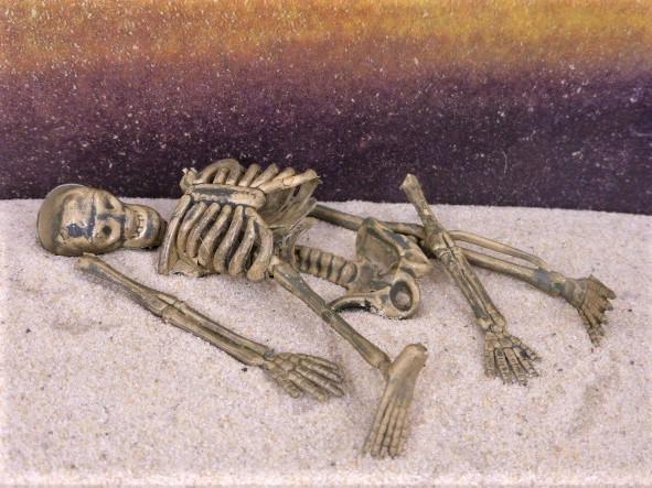 Knochenfund / Knochen ... lose