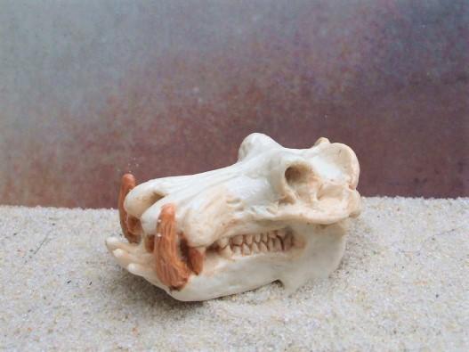 Nilpferdschädel