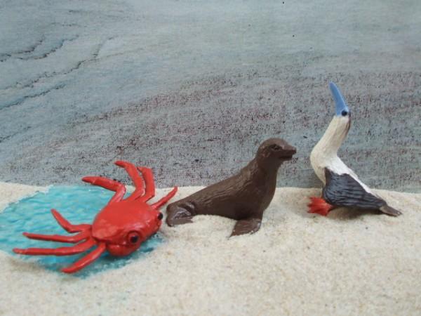 'Little Galapagos' - Rotfüßiger Tölpel & Krabbe & Pelzrobbe