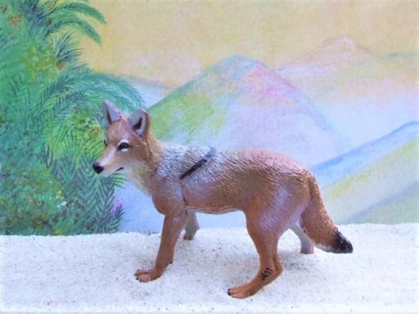 Kojote - weiblich