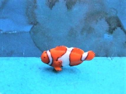 Clownsfisch - Serie 'Good Luck Minis'