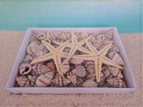 Seesternchen ... auf Muschelsand