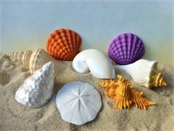 Set: Muscheln der Meere - Serie 'Seashells'