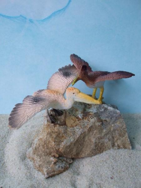 Set: Brauner Pelikan & Haubenvogel