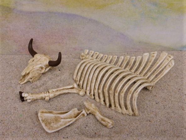 Knochen / Rinderskelett mit Schädel