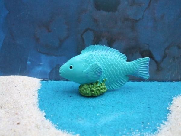 Türkisblauer 'Parrot Fish'