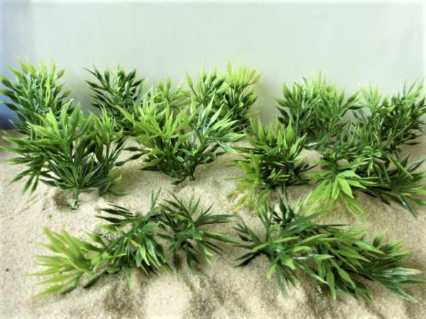 Sprießende stachelige Pflanzen