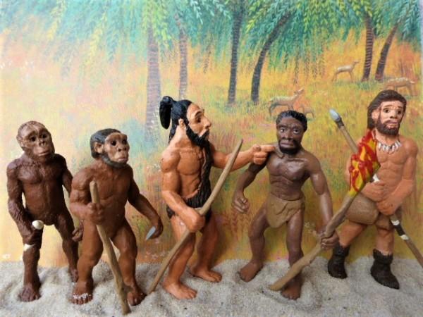 Evolution des Menschen