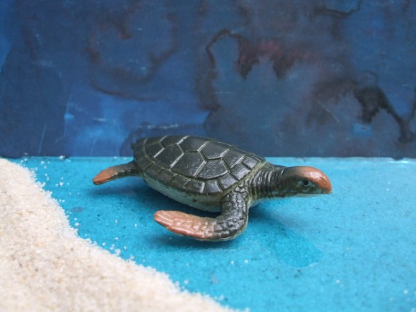 Kleine Meeresschildkröte 'Green Sea Turtle' - 3