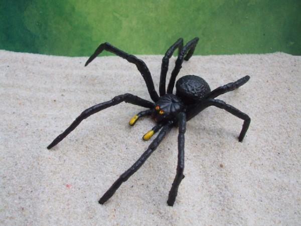 Spinne 'Schwarze Wittwe'