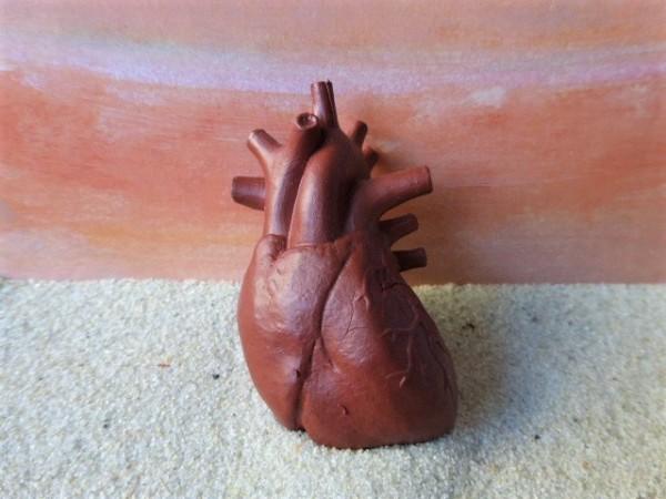 'Human Organs' - Herz