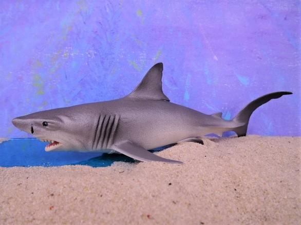 Weißer Hai / Baby-Hai