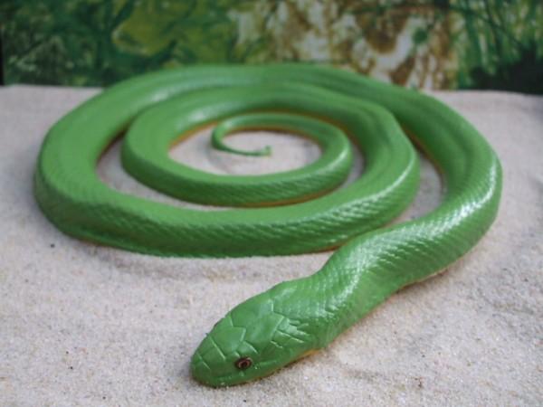 Große grüne Grasnatter
