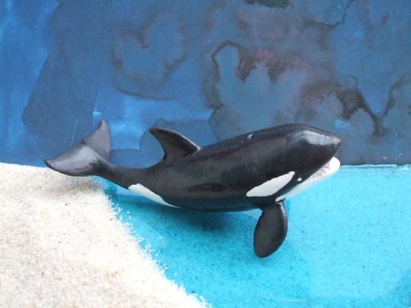 Orca - Schwertwal