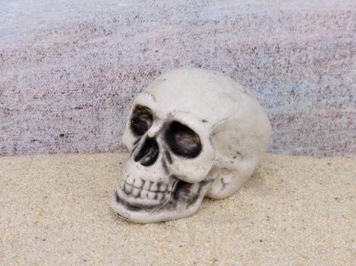 Totenkopf / Menschlicher Schädel