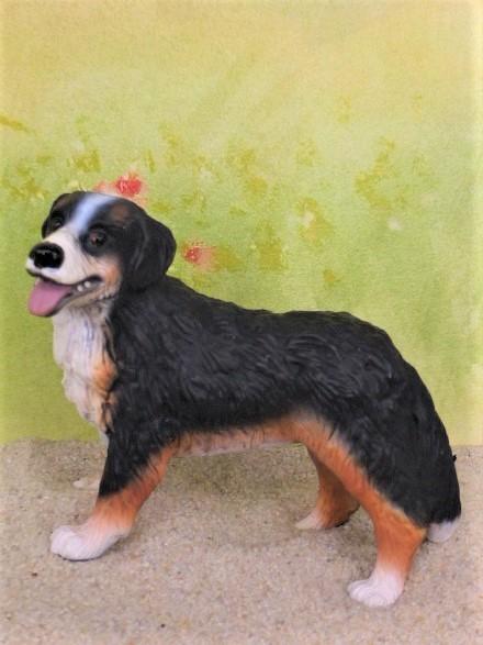 Berner Sennenhund 'Bianca'