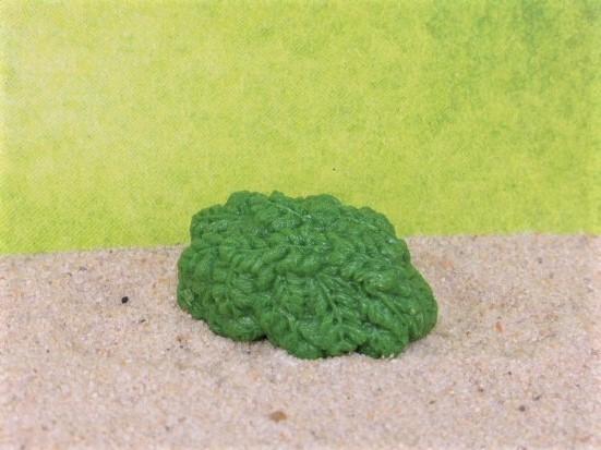 Salat / Futterpflanzen - dunkelgrünes Blattwerk