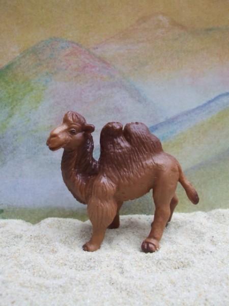 Kleines Kamel - 2