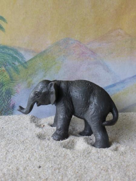 Asiatisches Elefantenbaby