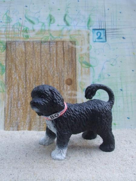 'Bo' - Portugiesischer Wasserhund