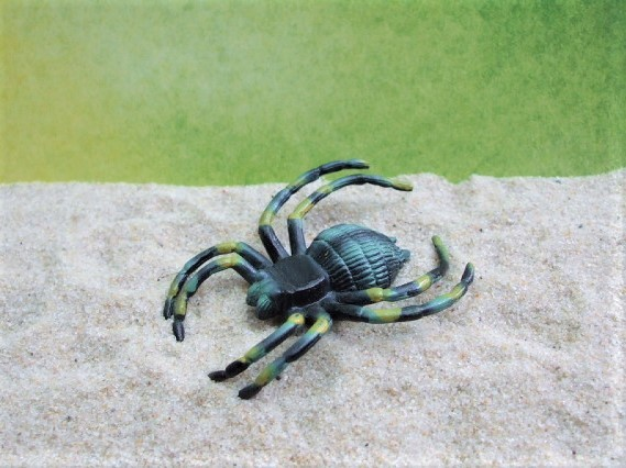 Spinne - mehrfarbig