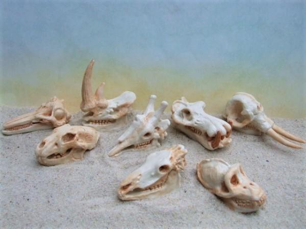 Röhre: Säugetierschädel - 'Mammal Skulls'