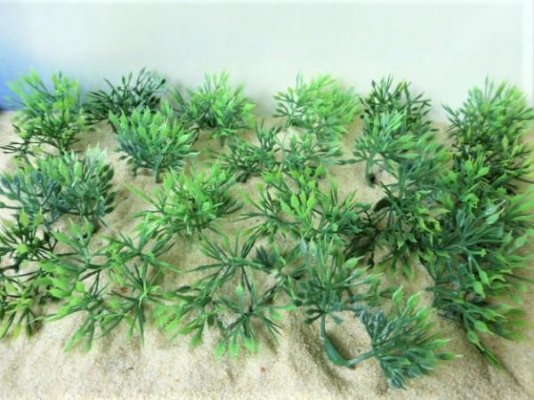 Sprießende buschige Pflanzen