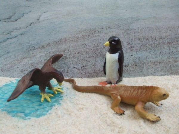 'Little Galapagos' - Land Leguan & Falke & Pinguin