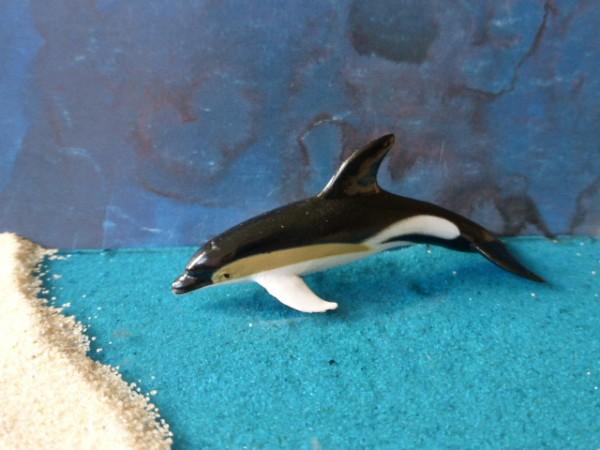 Kleiner Weißseitendelfin