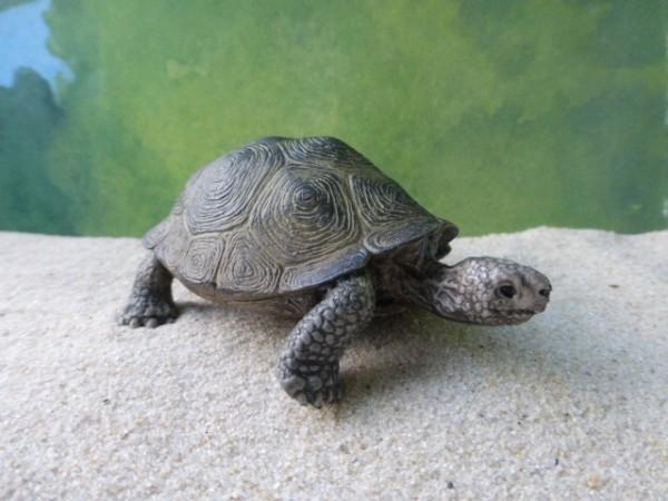 Graubraune Riesenschildkröte