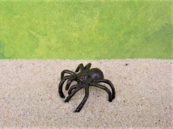 Kleine schwarze Spinne