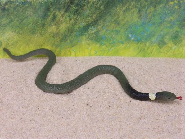 'Halsbandnatter' / Schlange in Bewegung - züngelnd
